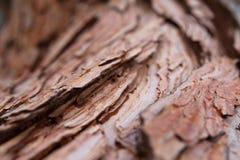 Abeto vermelho velho do bordo do cedro do pinho antigo do fundo da textura da casca do pinho Fotos de Stock