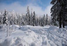 Abetos bajo la nieve foto de archivo