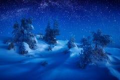 Abetos cubiertos con nieve en una luz de luna Fotografía de archivo