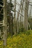 Abetos de Fraser muertos, Wildflowers fotos de archivo libres de regalías