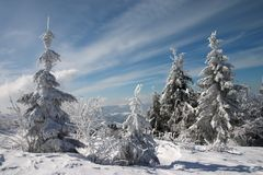 Abetos de la nieve Foto de archivo libre de regalías