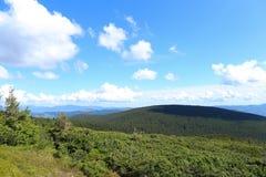 Abetos e hierba en montañas con las nubes en fondo Imagen de archivo