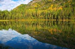 Abetos e lago pequeno Imagem de Stock Royalty Free