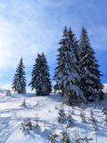 Abetos en invierno Imágenes de archivo libres de regalías