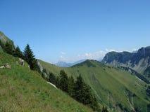 Abetos en la montaña imagen de archivo