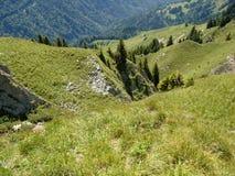 Abetos en la montaña foto de archivo libre de regalías