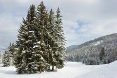 Abetos en la montaña del invierno Imagen de archivo