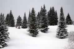 Abetos en la nieve Imágenes de archivo libres de regalías
