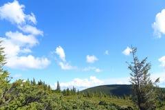 Abetos en montañas con las nubes en fondo Imágenes de archivo libres de regalías