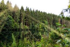 Abetos en un bosque al lado de un lago fotos de archivo