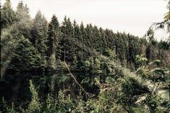 Abetos en un bosque al lado de un lago imagenes de archivo
