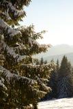 Abetos hermosos en las montañas, cubiertas con nieve Fotografía de archivo libre de regalías