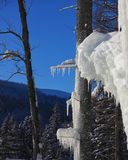 Abetos nevados del invierno en la ladera en el cielo azul con s Imagen de archivo libre de regalías
