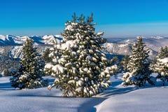 Abetos nevados en las montañas de Khamar-Daban Imagen de archivo libre de regalías