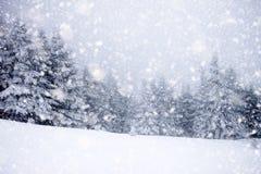 abetos nevados en las nevadas pesadas - fondo de la Navidad imagenes de archivo