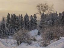 Abetos nevosos hermosos del paisaje del bosque del Año Nuevo de la Navidad Fotos de archivo