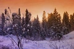 Abetos nevosos hermosos del paisaje del bosque del Año Nuevo de la Navidad Imagen de archivo