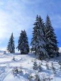 Abetos no tempo de inverno Imagens de Stock Royalty Free