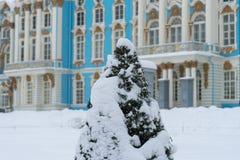 Abetos por completo de la nieve en Catherine Palace Imagenes de archivo