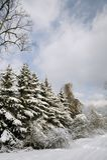Abetos Snow-covered Foto de Stock