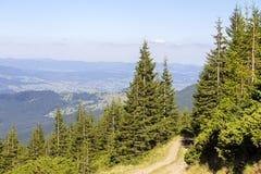 Abetos verdes contra la perspectiva de las montañas cárpatas en el verano ucrania Imagenes de archivo