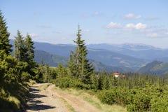 Abetos verdes contra la perspectiva de las montañas cárpatas en el verano ucrania Imágenes de archivo libres de regalías