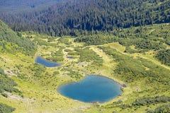 Abetos verdes y lago azul contra la perspectiva de las montañas cárpatas en el verano, visión superior ucrania Foto de archivo libre de regalías