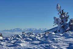 Abetos vermelhos cobertos de neve nas montanhas no inverno Fotografia de Stock Royalty Free