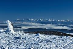 Abetos vermelhos cobertos de neve nas montanhas no inverno Imagens de Stock