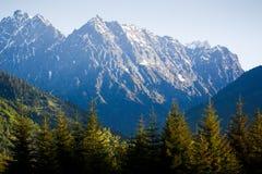Abetos vermelhos e montanhas da manhã Imagem de Stock Royalty Free