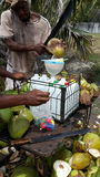 Abfüllendes frisches Kokosnusswasser stockbild