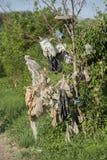 Abfall auf Baum Lizenzfreies Stockfoto