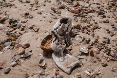 Abfall auf dem Strand Verlassener Schuh Abfall und Verschmutzung auf dem Strand Verschmutzung und Umwelt Stockbild