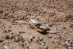 Abfall auf dem Strand Verlassener Schuh Abfall und Verschmutzung auf dem Strand Verschmutzung und Umwelt Lizenzfreies Stockfoto