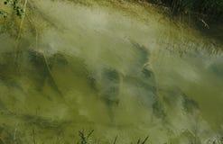 Abfall auf grünem Kanal der Wasseroberflächen-Verschmutzung öffentlich und Abwasser von den Fabriken Stockfoto