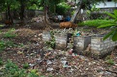 Abfall auf Nusa Penida Lizenzfreie Stockfotos
