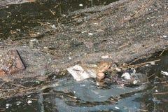 Abfall, der auf Wasser im niederländischen Hafen schwimmt Lizenzfreies Stockfoto