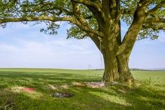 Abfall gelassen hinter einem Baum Stockfotos