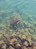 Abfall im Meer Stockfoto