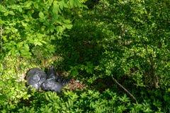 Abfalltaschen, die unvorsichtig weggeworfen in den Wald liegen stockfotografie