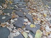 Abfallzeit mit getrockneten Blättern Stockfotos