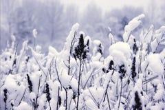 Abgedeckt mit Schnee Stockfotos