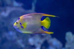 Abgedeckte Basisrecheneinheits-Fische lizenzfreies stockbild
