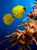 Abgedeckte Basisrecheneinheits-Fische Stockbilder