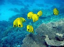 Abgedeckte Basisrecheneinheitsfische lizenzfreies stockbild