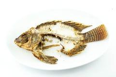 Abgefeuerte Fische Stockfotografie