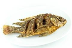 Abgefeuerte Fische Stockbilder