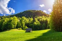 Abgelegene Kabine im Wald Gebirgsblockhaus umgeben durch Bäume und Gras lizenzfreies stockbild