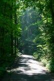 Abgelegene Land-Straße durch den Wald Stockbild