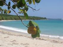 Abgelegener perfekter karibischer sandiger Strand stockbilder
